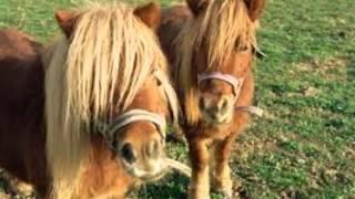 Los Caballos ♥ 5 Ponis