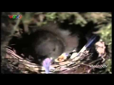 Đời sống một số loài chim ở Nhật Bản phần 1-Công ty môi trường