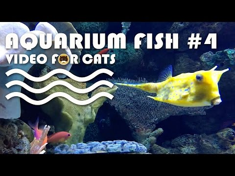 Cat videos for cats to watch fish swimming fish video for Fish cat game
