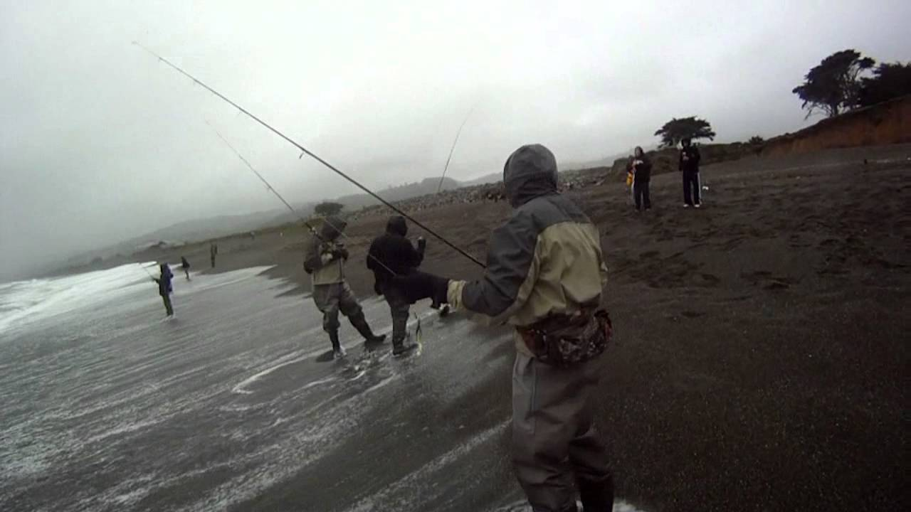 Surf fishing on the beach for striped bass using a for Surf fishing for stripers