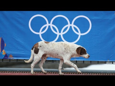 Sochi Orders Mass Killing Of Stray Dogs | The Rubin Report