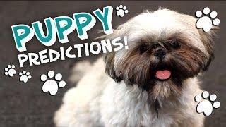 Puppy Predicts Oscar Best Picture 2014 Puppy Movie