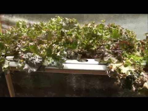 Sistema hidropônico caseiro