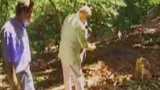 Huell Howser, Avocados and a Dog that Eats Avocados