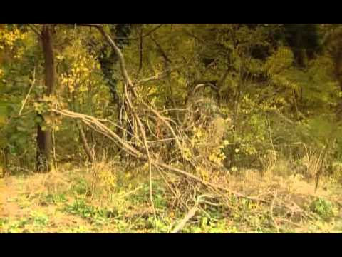 Specnaz - Đội đặc nhiệm vietsub Tập 3 Part 2/4