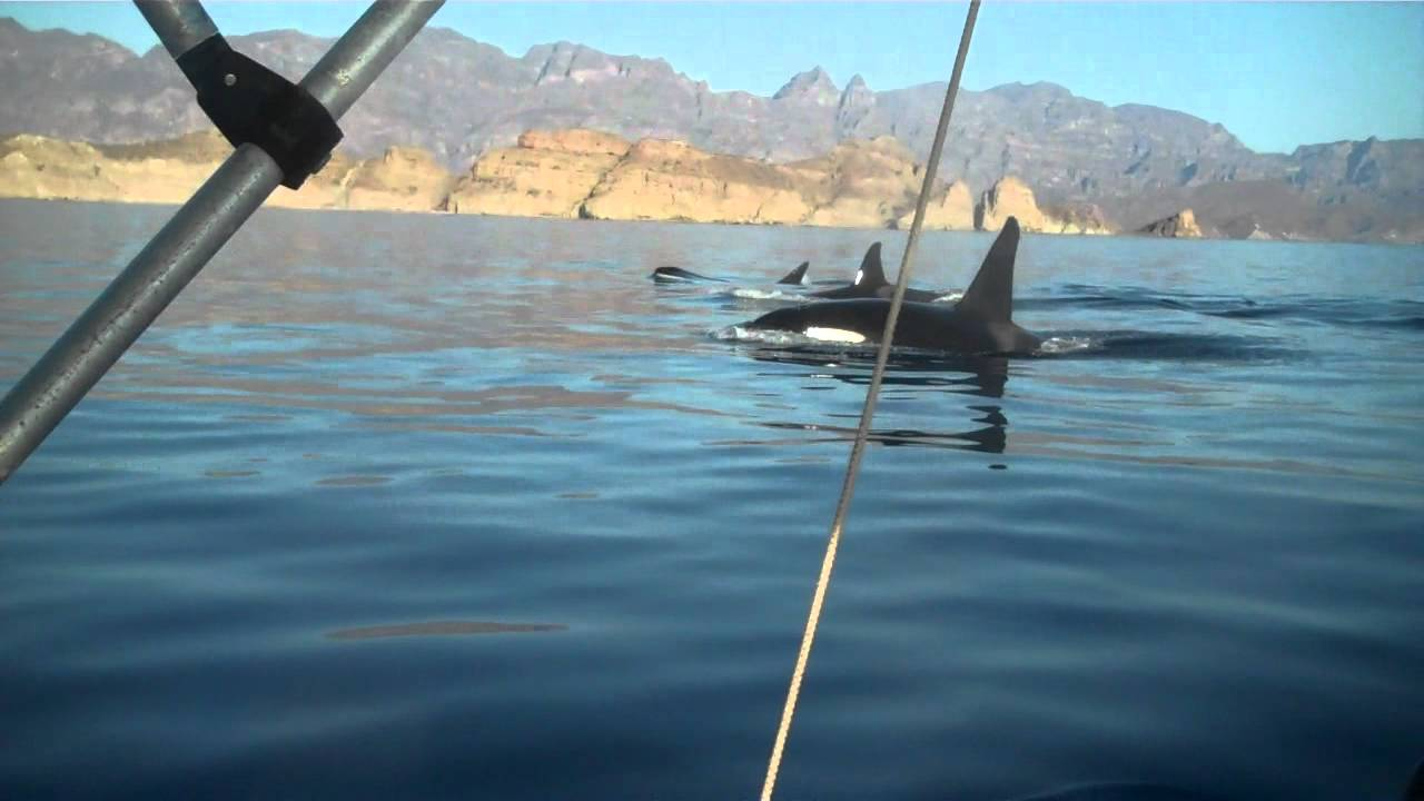 While fishing it up for dorado in loreto baja mex we for Loreto mexico fishing