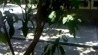 VIDEO PEMBELAJARAN VEGETATIF TUMBUHAN PGSD FKIP UNS view on youtube.com tube online.