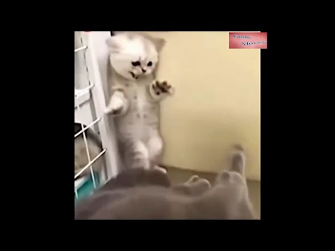 Funny Animals Movie - Try Not To Laugh.Cats Dogs - Compilation. FUNNY PET VIDEOS. 05