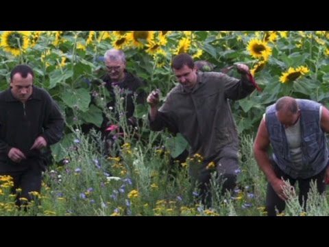 Freelance journalist describes MH17 site