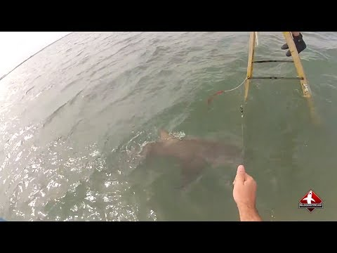 Shark Fishing on a Ladder