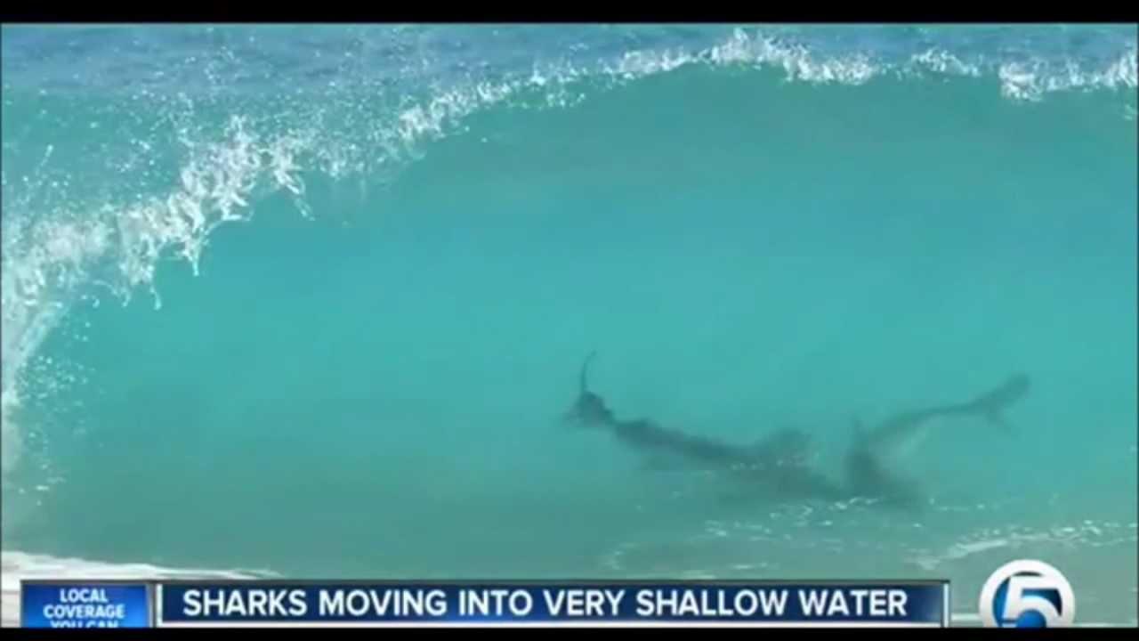 Megalodon Shark Sightings 2014
