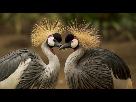 New cute and funny beautiful birds 4K videos of 2020. #cute #funny #new #birds #kids #2020.