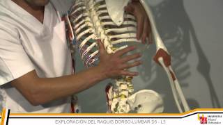 UMH - Terapia Manual I: RAQUIS CERVICAL - DORSAL - LUMBAR