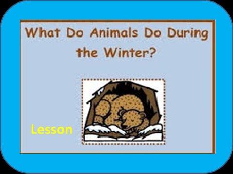 ... Animals -for Kids of Kindergarten,Preschoolers,Toddlers - YouTube