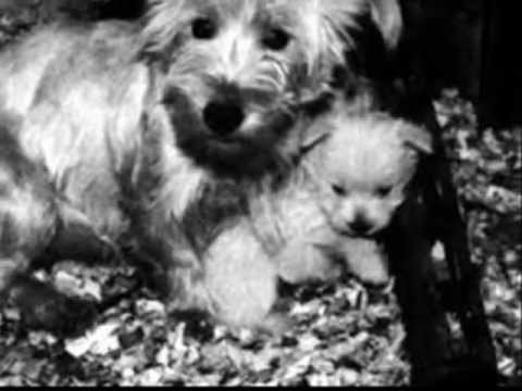 0 Puppy Mills   Designer Dogs