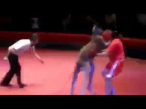 Kangaroo boxing - funny
