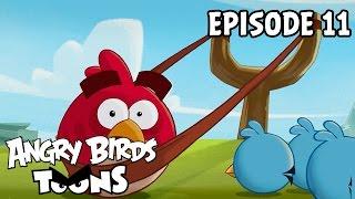 Angry Birds Toons #11 - Lekcia praku 101