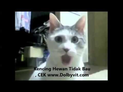 Terbaru Aksi Kucing-kucing Lucu Banget 2013