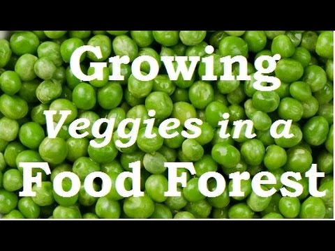 Food Forest Veggies. Growing Vegetables in a Permaculture Garden