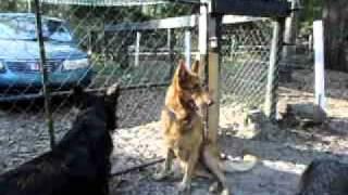 Lobo.AVI view on youtube.com tube online.