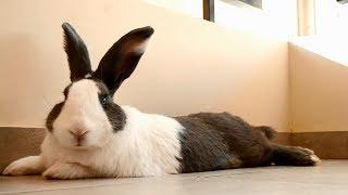 Bunny Hits The Camera