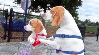 Dog Takes Puppy on Journey in Shopping Cart  Cute Dog Maymo ...