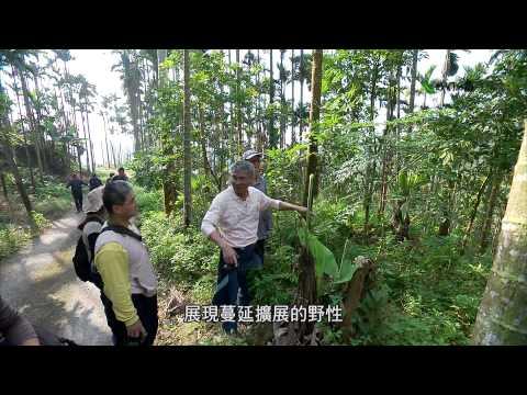 我們的島 第699集 土地公的本事 (2013-03-25) - YouTube