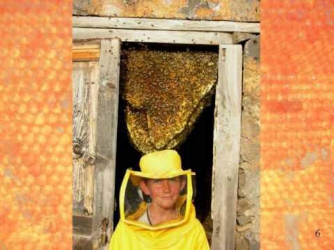 Natürliche Anordnung der Bienenwaben - ResistantBees.com