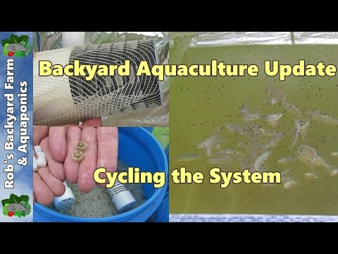 Backyard Aquaculture Update, Cycling the System.. 3rd June 2014