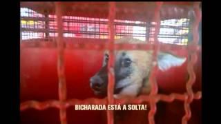 Lobo-guar� � resgatado dentro de estacionamento em Varginha, no Sul de Minas