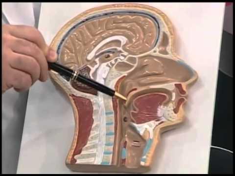 Dr. Jamal Azzam fala sobre amígdalas e adenoide