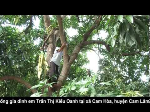 UMVN   T94   Nha Trang   Kieu Oanh