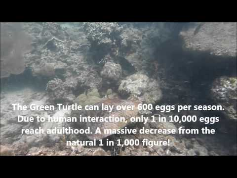Turtle Conservation