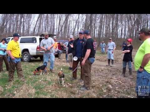 2014 UKC Hunting Beagle Nationals