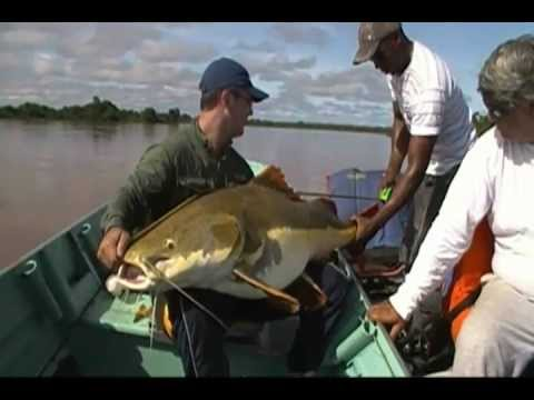 Pescaria Pirarara Gigante Araguaia / Giant red tail catfish - Fishing Brazil - SÓ PIRAÍBAS