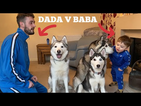 Who Do My Huskies Love The Most Challenge! [DAD V BABY!!] [BIG SURPRISE!]