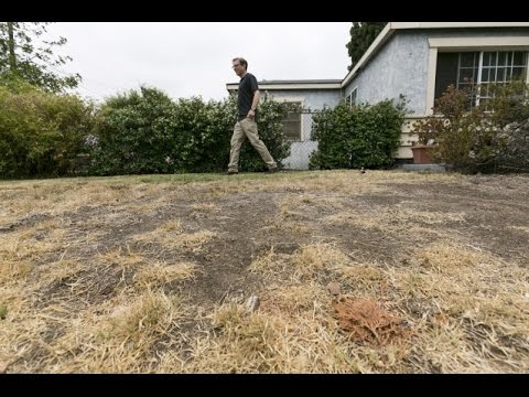 Couple Fined $500 For Brown Lawn.. In A Drought