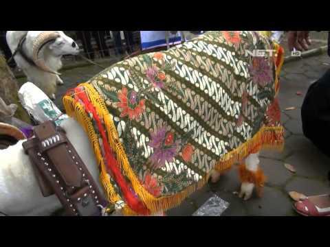 NET5 - Lomba kostum Domba di Garut