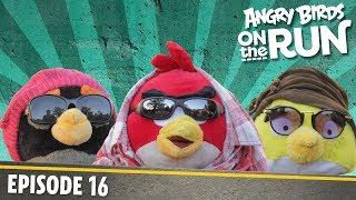 Angry Birds na úteku - Módna prehliadka