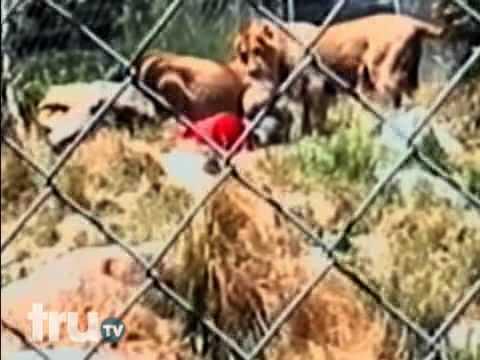 Sư tử ăn thịt người tại sở thú