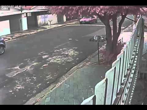 Cachorro roubado no Mollon - SB