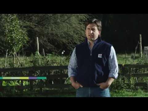 Huerta orgánica familiar: producción de abono casero