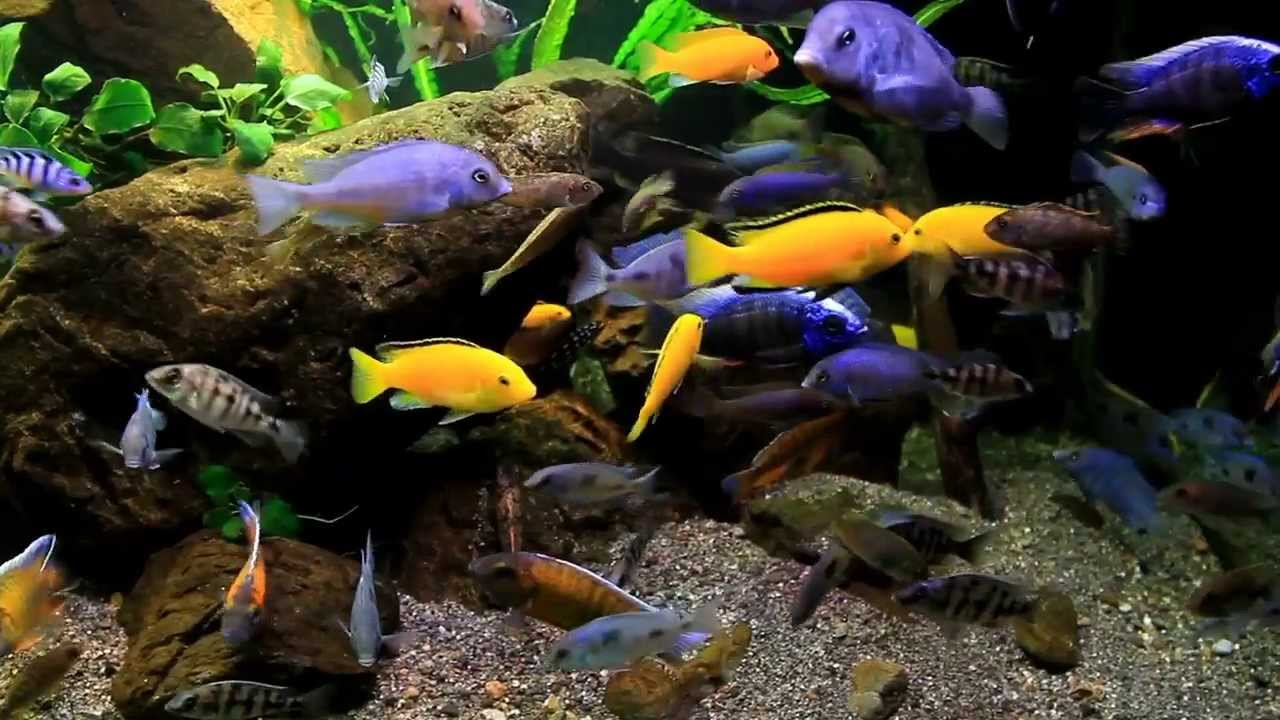 Fish filter not working fish free engine image for user for Aquarium fish pond