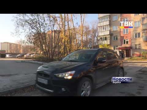 В Бердске идет активная борьба с аварийными деревьями. Что взамен?