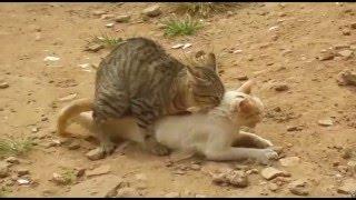 stop cat allergies