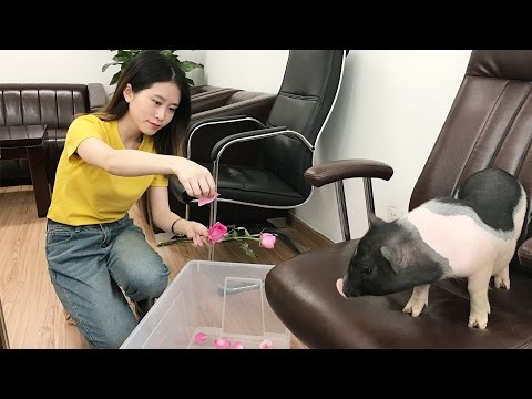 Vlog 01-Time to Take a Flower Bath | Ms Yeah's Daily life