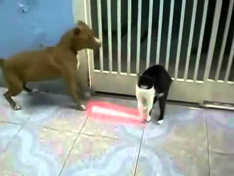 chó mèo đánh nhau như star war =))