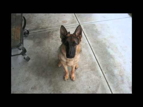 Time Lapse: Puppy to Adult in 40 seconds. Dunder photo a day. Year 1