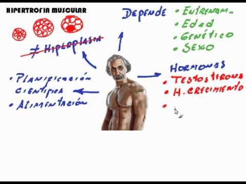 Ciencia e Hipertrofia Muscular: Introducción