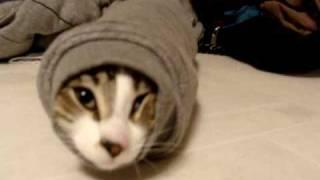 Kucing ini terperangkah di lengan sweater